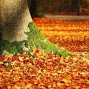 Ventilateur aspirateur de feuilles