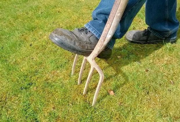 Se débarrasser de la mousse dans les pelouses