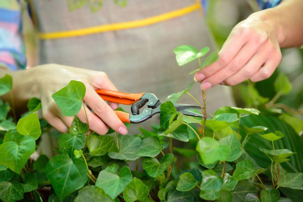 conseils pratiques pour le jardin