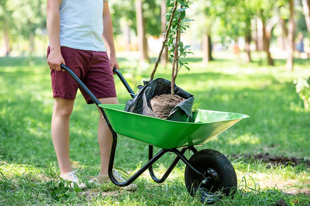 indispensables pour jardin