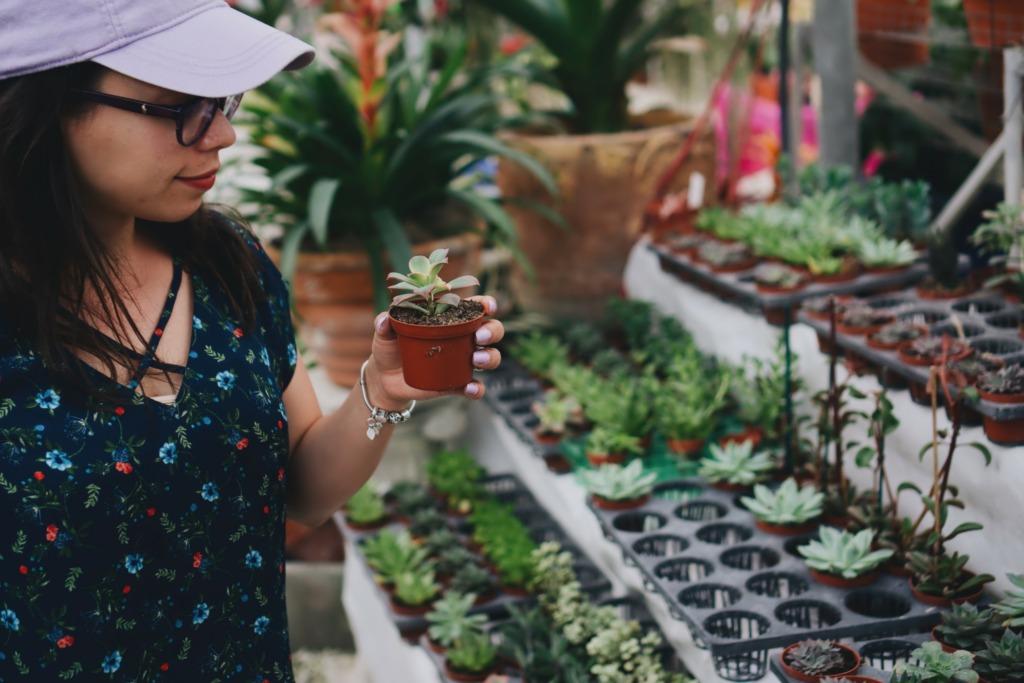 plante adapté jardin