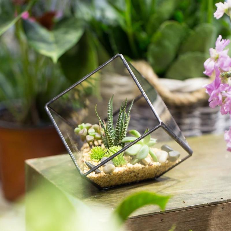 Terrarium plante